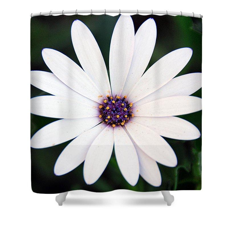 Daisy Shower Curtain featuring the photograph Single White Daisy Macro by Georgiana Romanovna