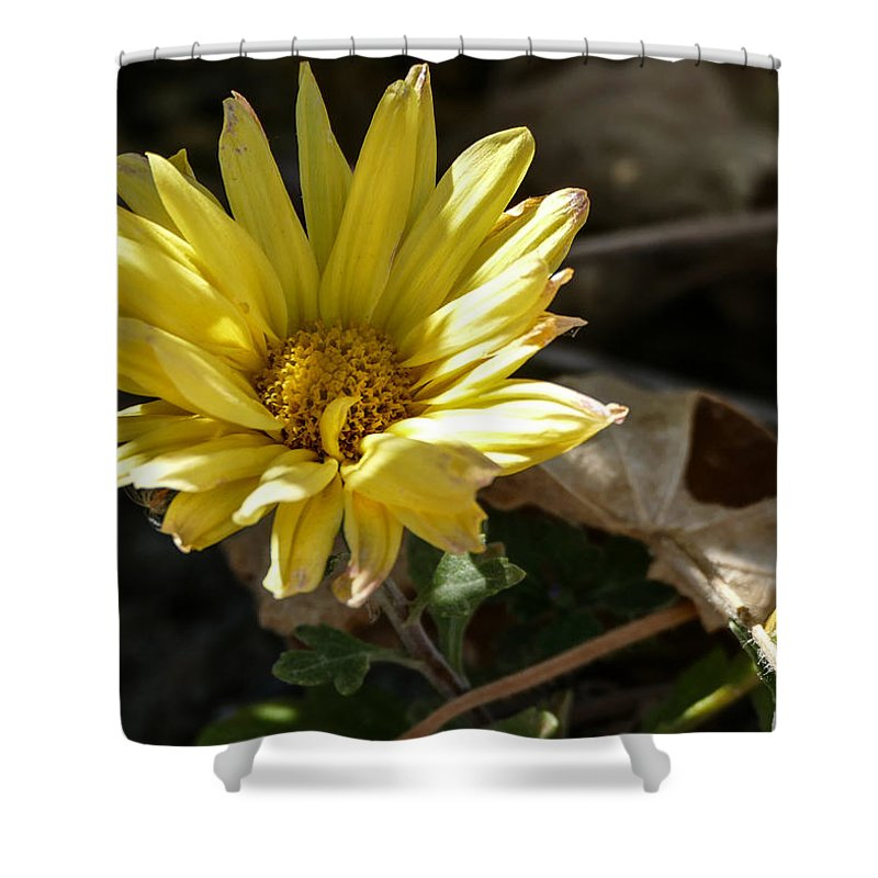 Flora Shower Curtain featuring the photograph Single Yellow Mum by Laurel Powell