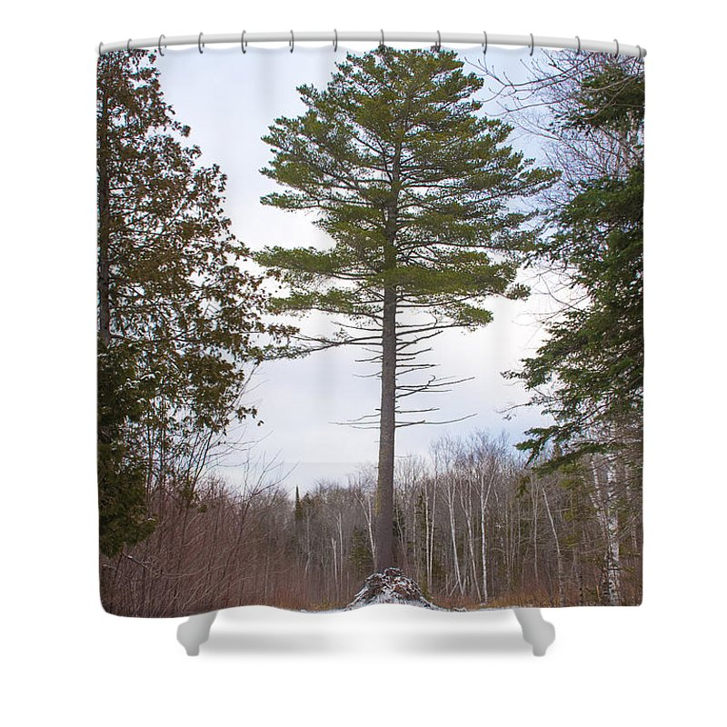 Snow Shower Curtain featuring the photograph Singled Out by Wesley Farnsworth
