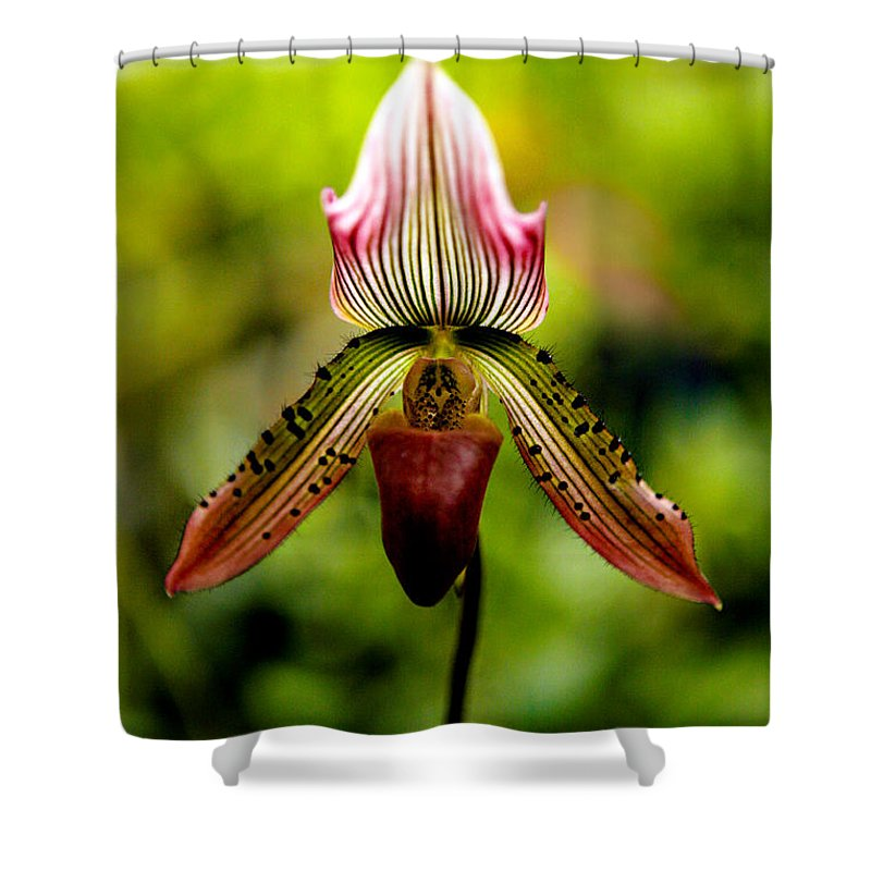 Orchid Shower Curtain featuring the photograph Singular Beauty by Marilyn Hunt