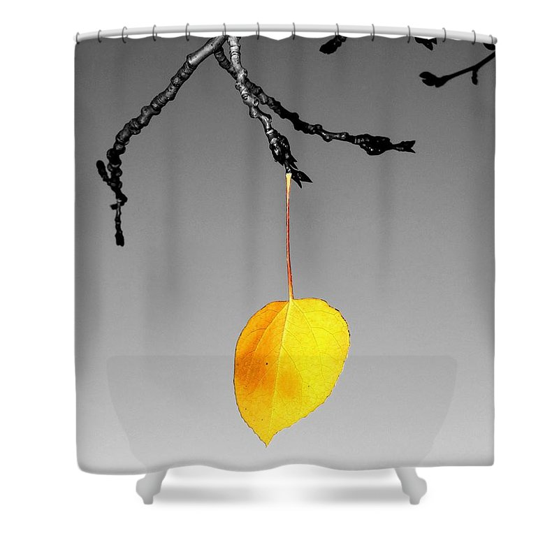 Quaking Shower Curtain featuring the photograph Singular Sensation by LeAnne Perry