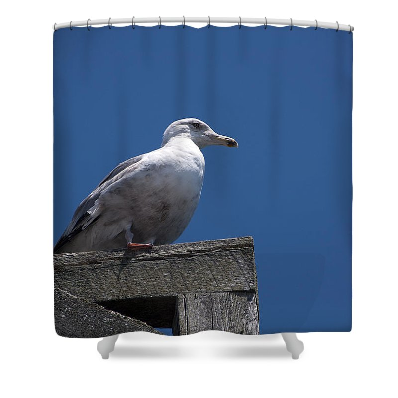 Dock Shower Curtain featuring the photograph Sitting by the Dock of the Bay by Steven Natanson