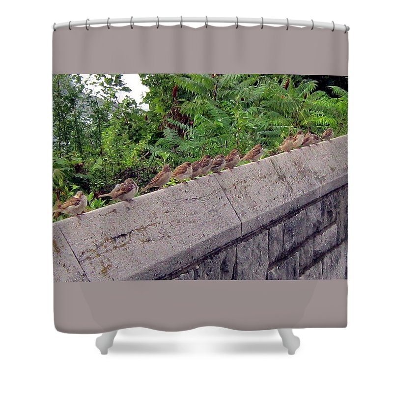 Birds Shower Curtain featuring the photograph Sitting On A Ledge by Abby Humphries