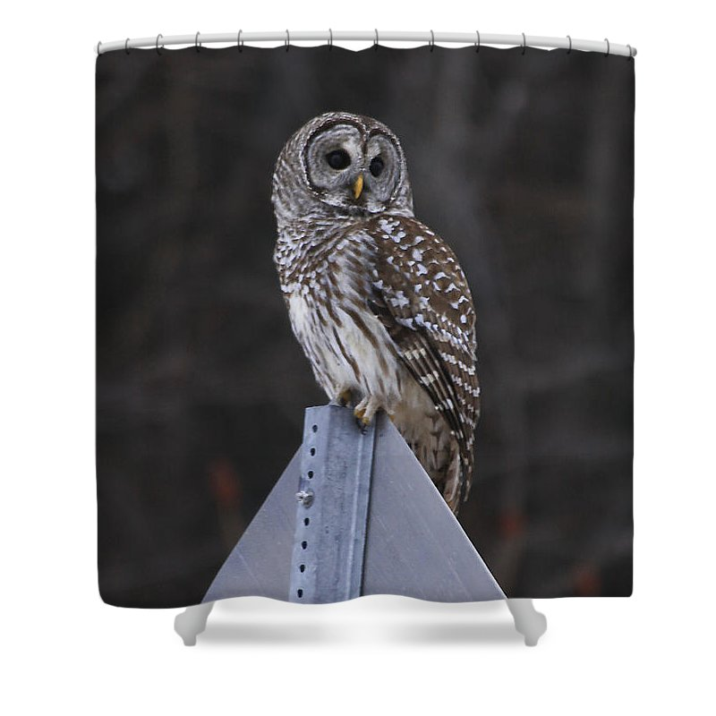 Bird Shower Curtain featuring the photograph Sitting On The Sign Post by Deborah Benoit