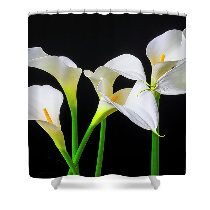Graphic Shower Curtain featuring the photograph Six Calla Lilies by Garry Gay