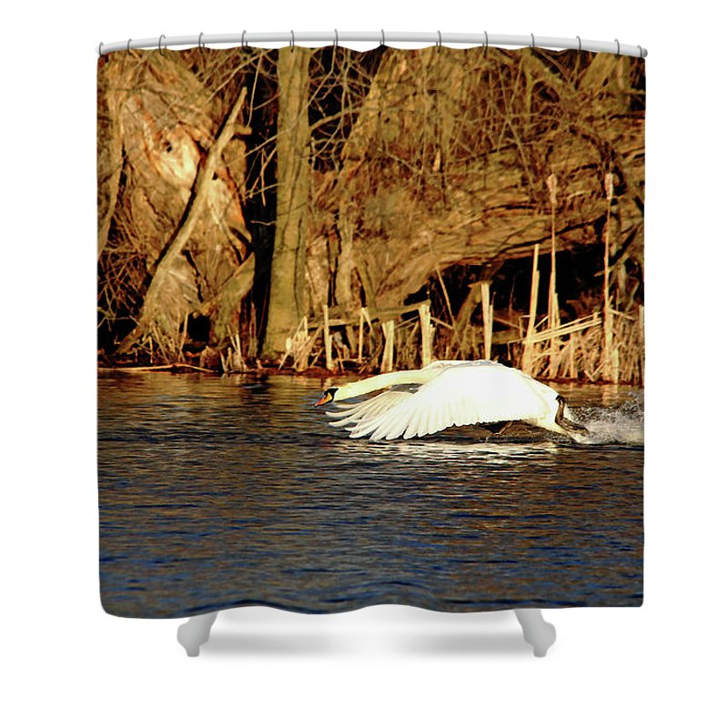 Mute Swan Shower Curtain featuring the photograph Skimming The Water by Debbie Oppermann