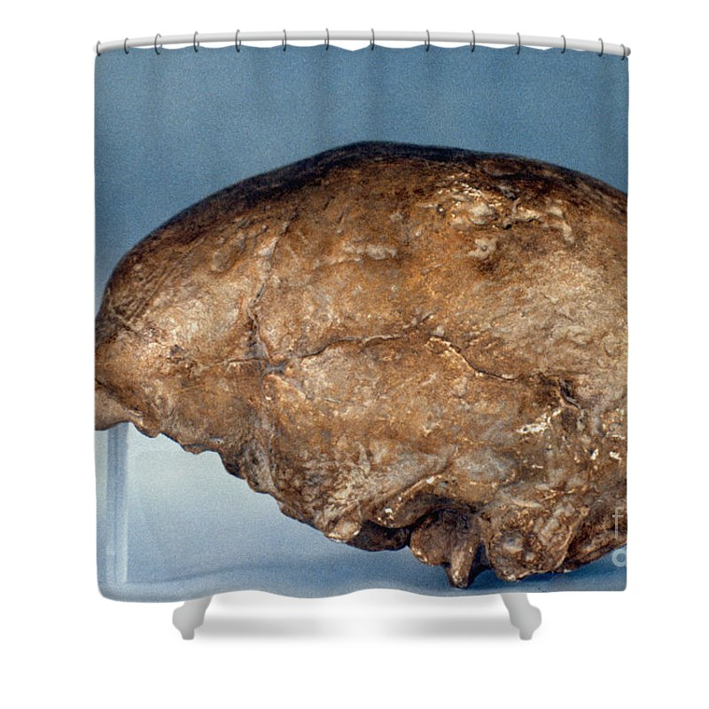 Ancient Shower Curtain featuring the photograph Skull Of Peking Man by Granger