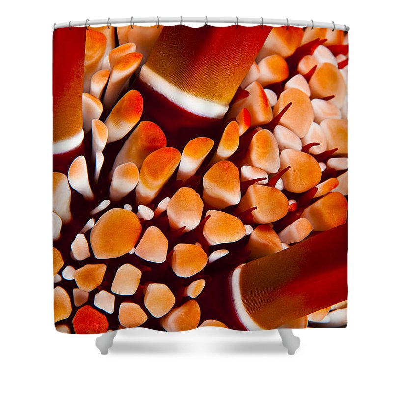 Abstract Shower Curtain featuring the photograph Slate Pencil Urchin by Dave Fleetham - Printscapes