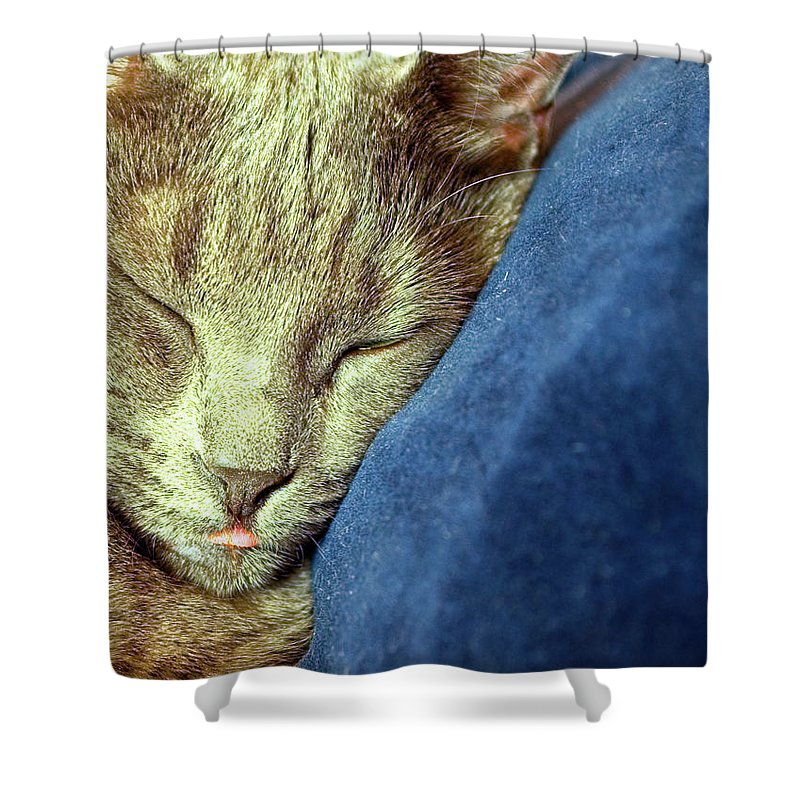 Cats Shower Curtain featuring the photograph Sleeping Cat by Jarmo Honkanen