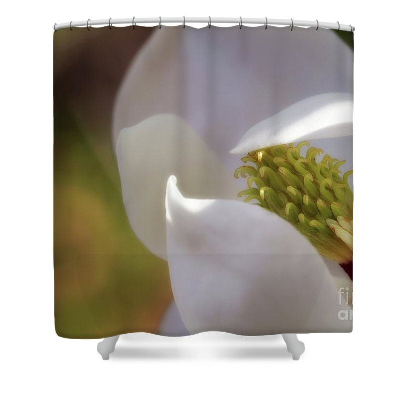 Magnolia Shower Curtain featuring the photograph Sleeping Magnolia by Sabrina L Ryan