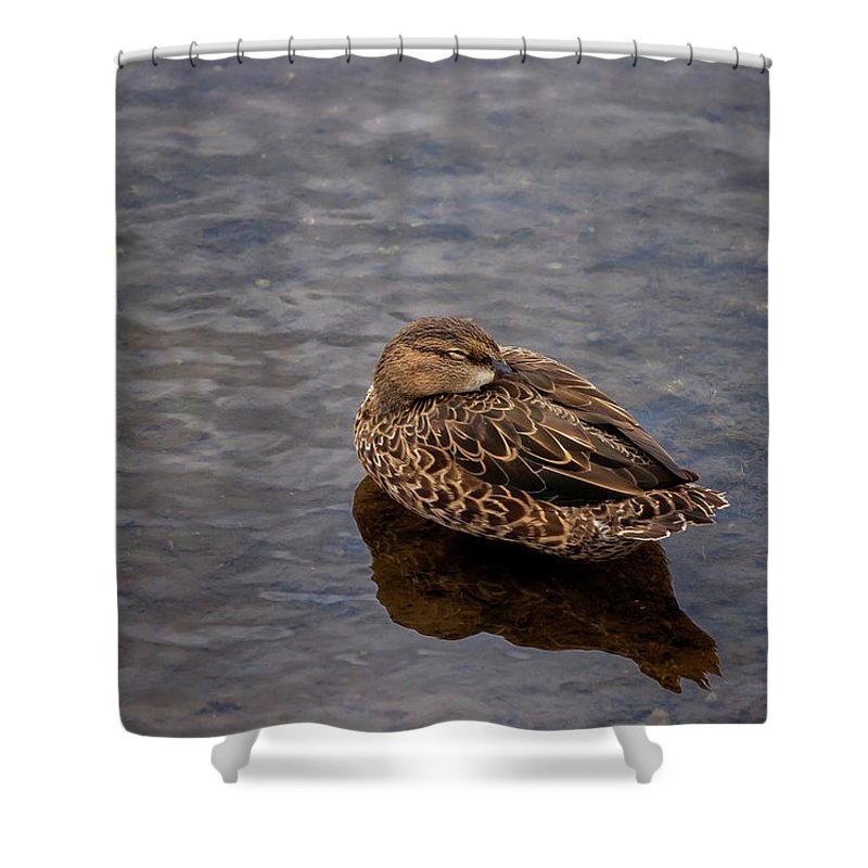 Nature Shower Curtain featuring the photograph Sleepy Duck by Arthur Dodd