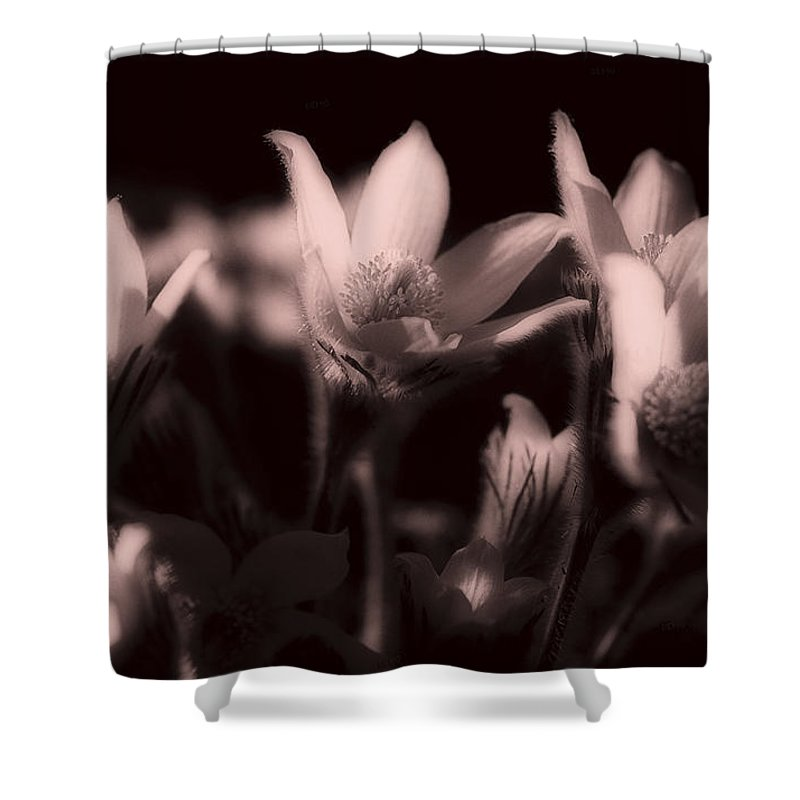 Flowers Shower Curtain featuring the photograph Sleepy Flowers 2 by Marilyn Hunt