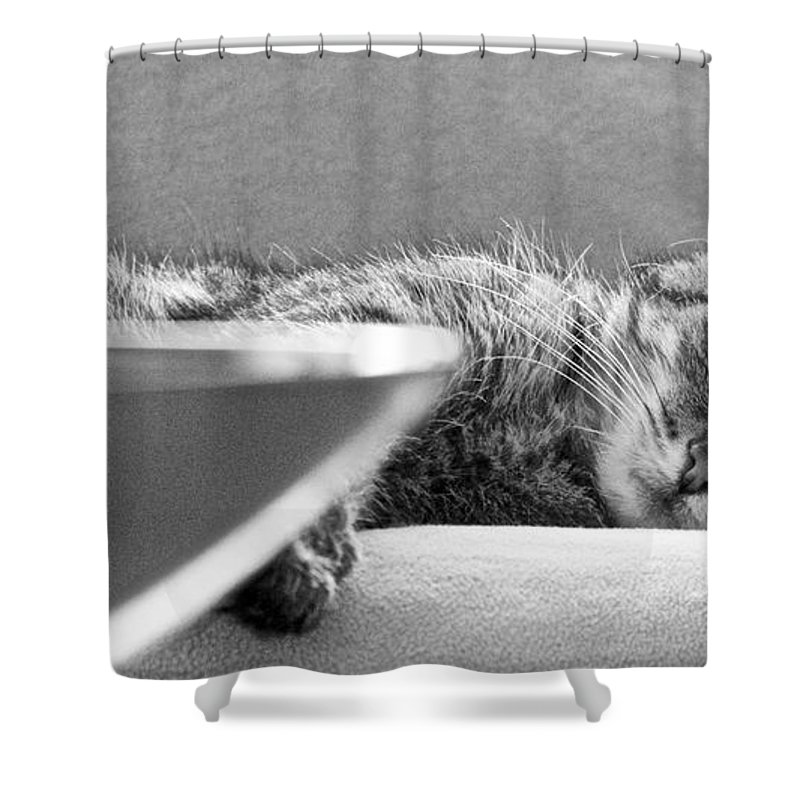 Oscar Shower Curtain featuring the photograph Sleepy Time by Cathy Fitzgerald