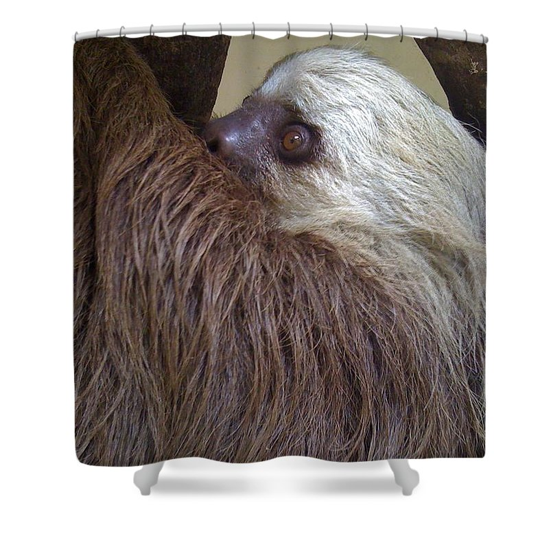 Sloth Shower Curtain featuring the photograph Sloth by Dolly Sanchez