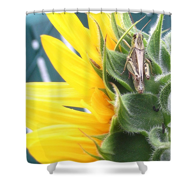 Sunflower Shower Curtain featuring the photograph Small Break by Line Gagne