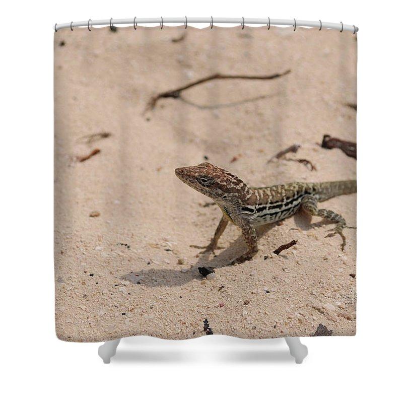 Lizard Shower Curtain featuring the photograph Small Brown Lizard Sitting On A White Sand Beach by DejaVu Designs