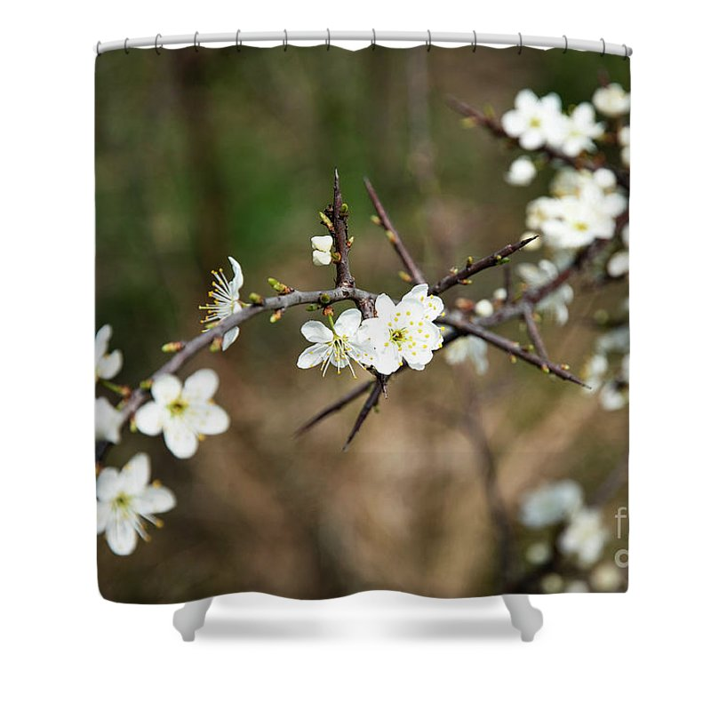 Spring Shower Curtain featuring the photograph Small White Flowers Of Thorns by Jozef Jankola