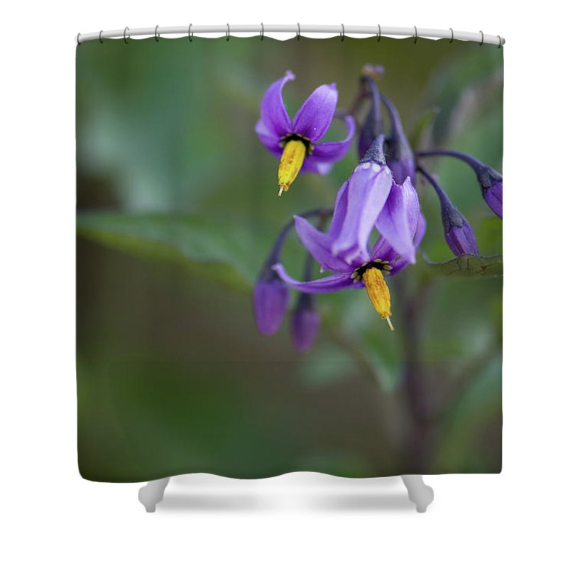 wild Flowers Shower Curtain featuring the photograph Small Wonder by Paul Mangold