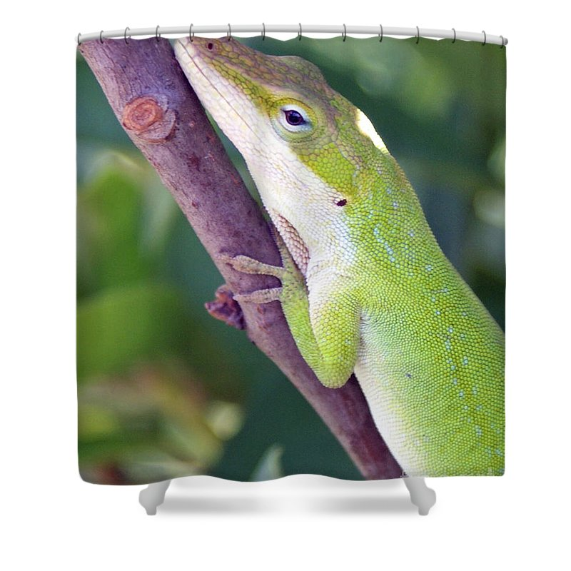 Animal Shower Curtain featuring the photograph Smile by Shelley Jones