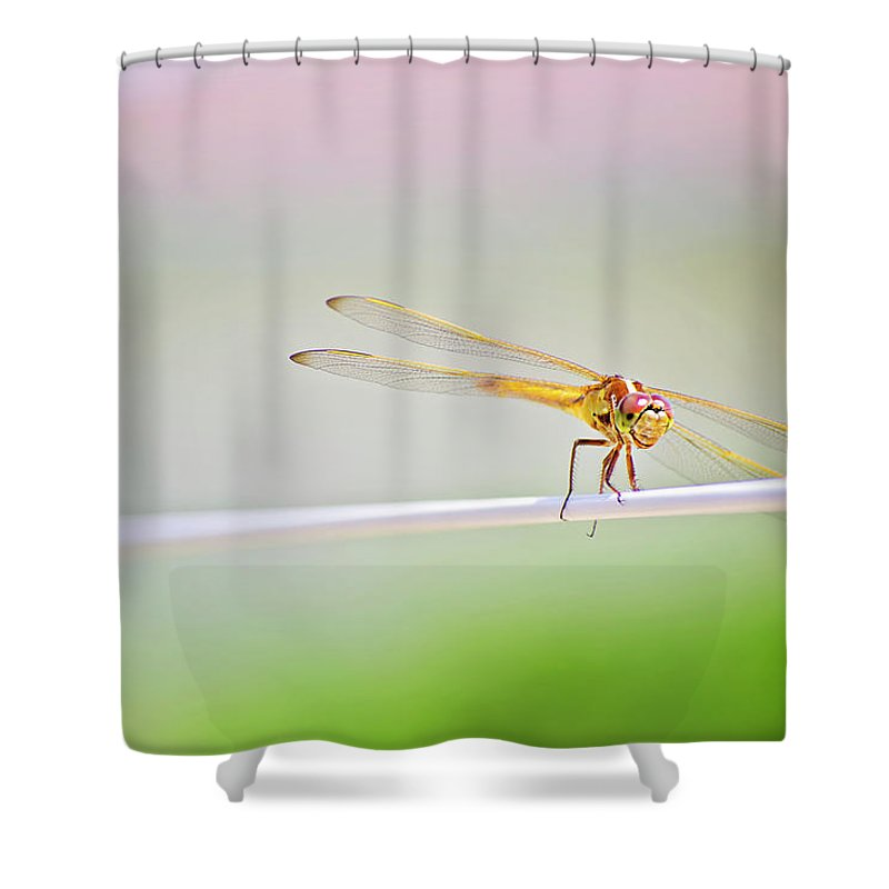 Dragonfly Shower Curtain featuring the photograph Smiling Dragonfly by Micah Williams