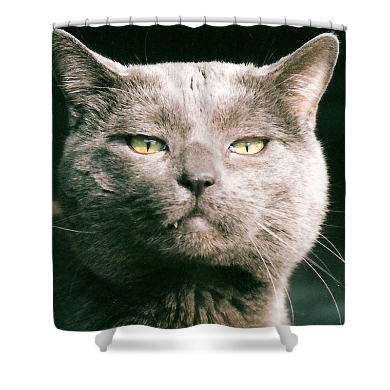 Cat Shower Curtain featuring the greeting card Smokey by Lauri Novak