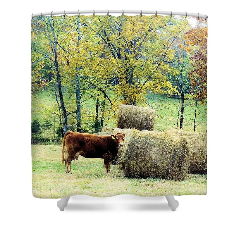 Animals Shower Curtain featuring the photograph Smorgasbord by Jan Amiss Photography
