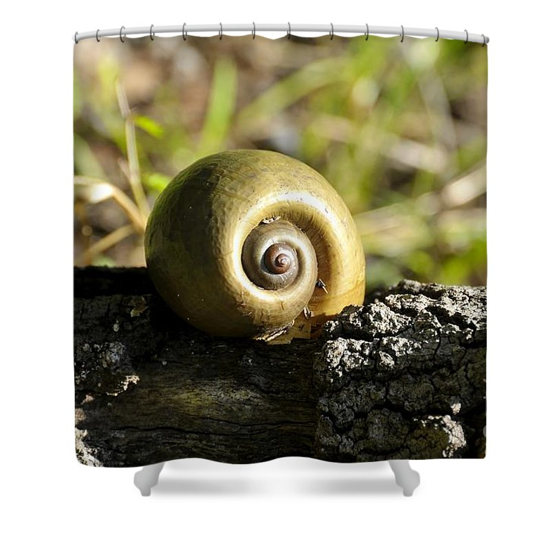 Snail Shower Curtain featuring the photograph Snail by David Lee Thompson