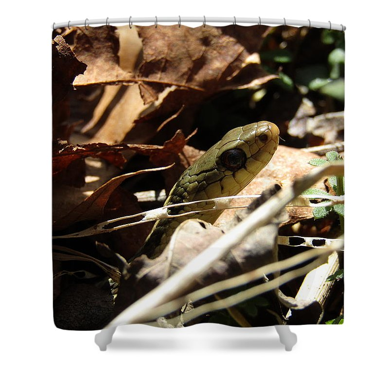 Snake Shower Curtain featuring the photograph Snake In Nature by Jeremiah Wilson