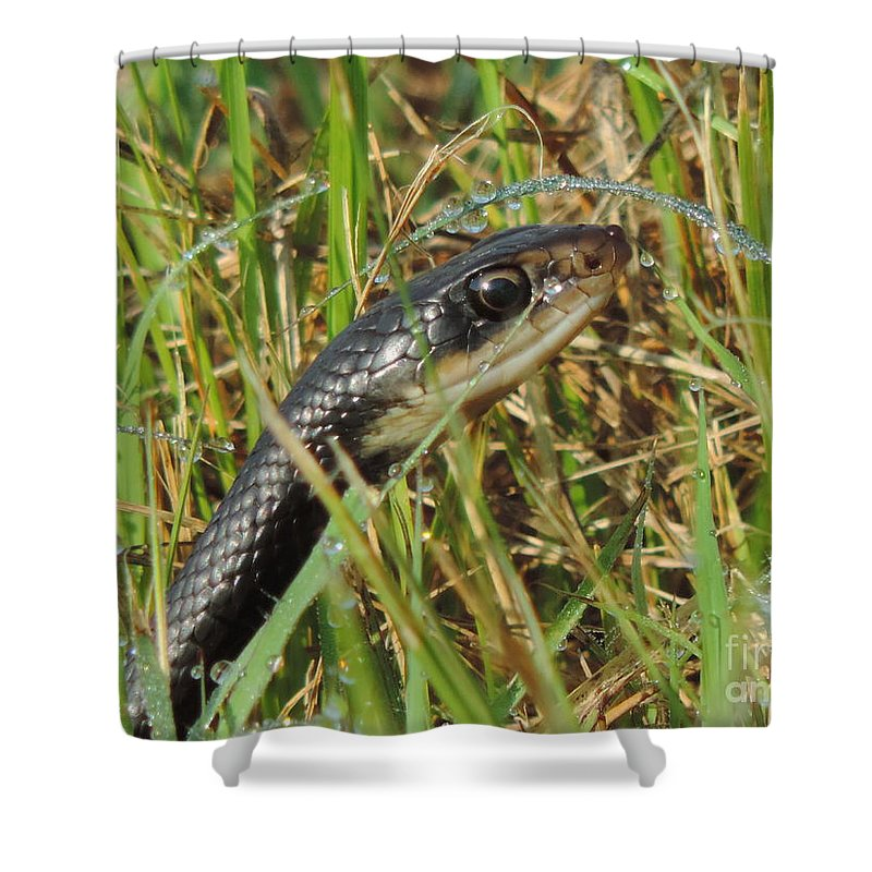 Snake Shower Curtain featuring the photograph Snake In The Grass by Luke George