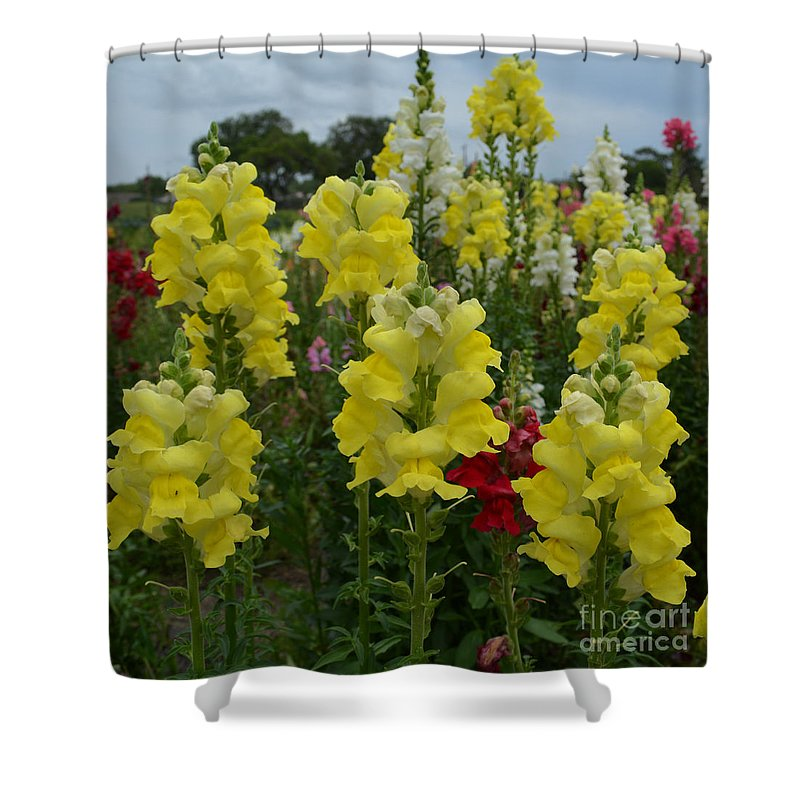 Snapdragons Shower Curtain featuring the photograph Snapdragons Flowers 3 by To-Tam Gerwe