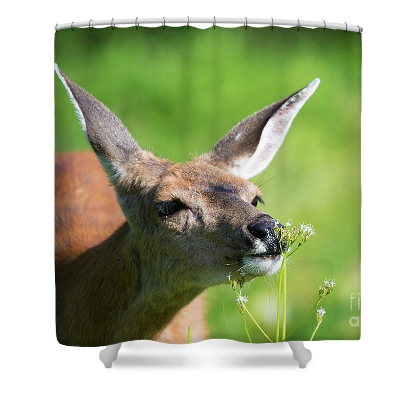 Doe Shower Curtain featuring the photograph Sniffing Out Dinner by Mike Dawson