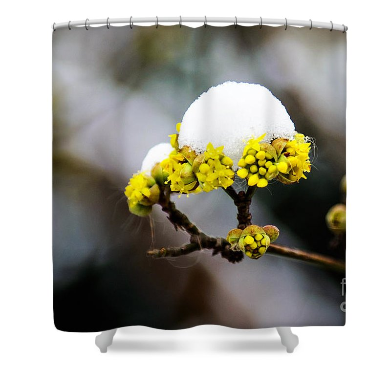 Central Park Shower Curtain featuring the photograph Snow Capped Flower by Anna Serebryanik