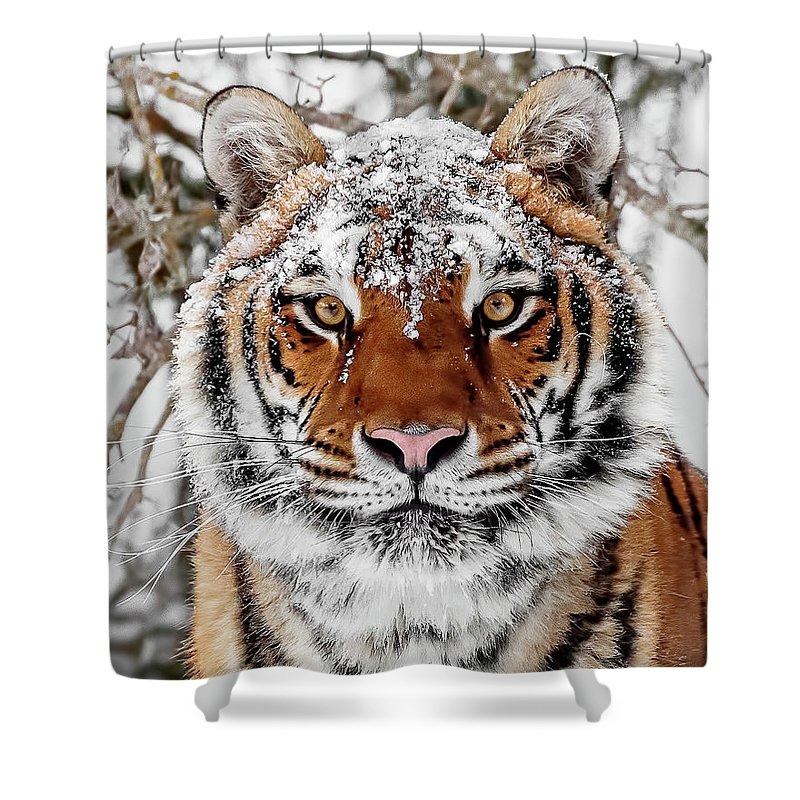 Snow Capped Siberian Shower Curtain featuring the photograph Snow Capped Siberian by Wes and Dotty Weber