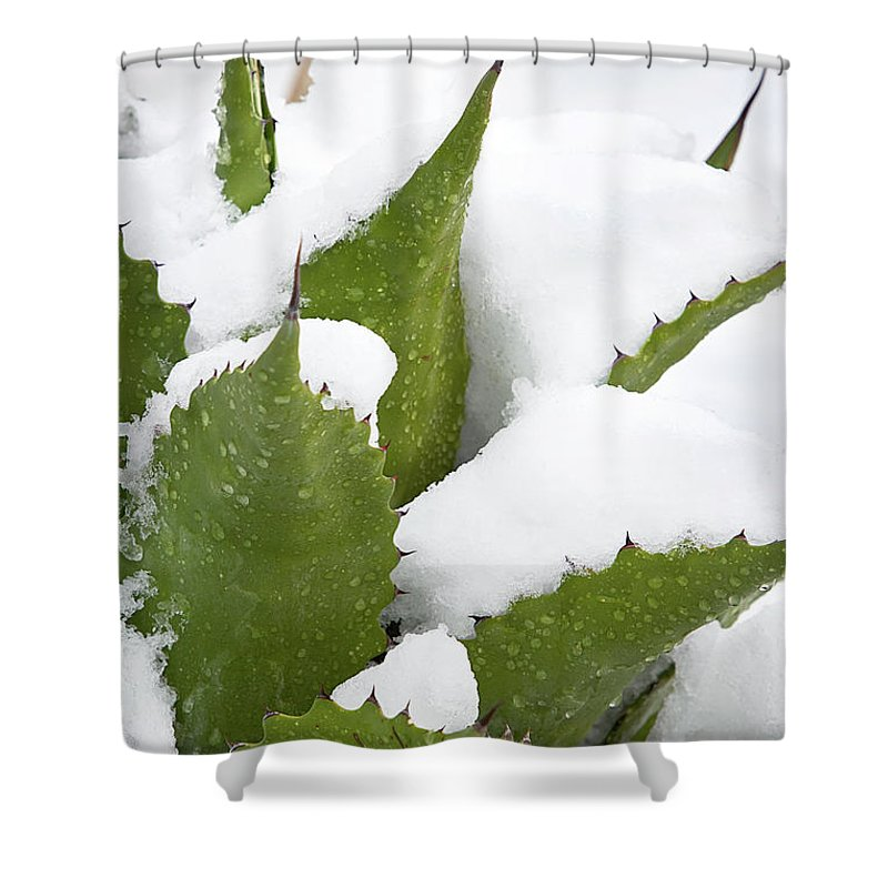 Agave Shower Curtain featuring the photograph Snow Covered Agave by Phyllis Denton