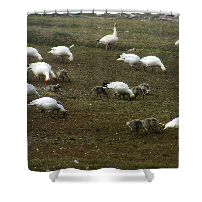 Snow Geese Shower Curtain featuring the photograph Snow Geese by Anthony Jones
