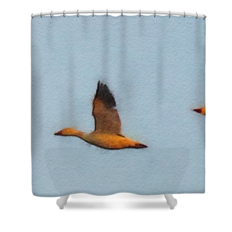 Snow Geese Shower Curtain featuring the digital art Snow Geese At Dawn by Rrrose Pix