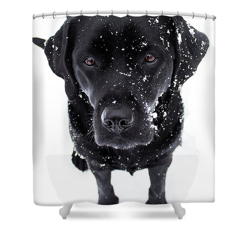 Black+labrador Shower Curtain Featuring The Photograph Snow Globe   Black  Labrador By Black Dog