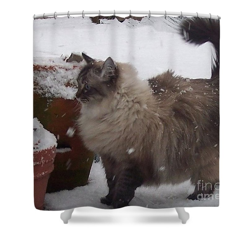 Cats Shower Curtain featuring the photograph Snow Kitty by Debbi Granruth