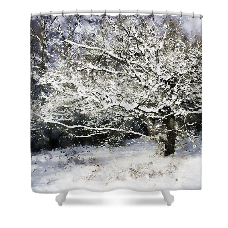 Snow Shower Curtain featuring the digital art Snow Tree by Ann Garrett