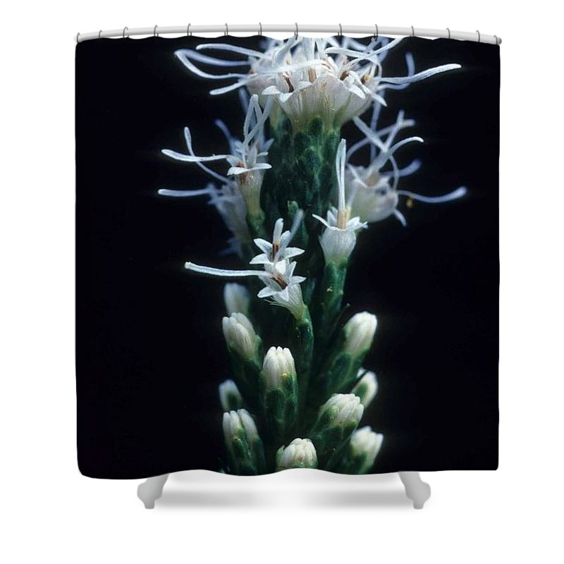 Flower Shower Curtain featuring the photograph Snowflake Flower by Laurie Paci
