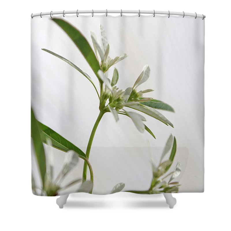 Flower Shower Curtain featuring the photograph Snowflake by Holly Kempe