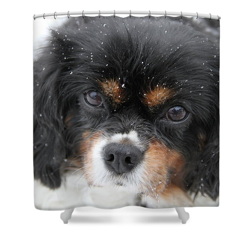 Dog Shower Curtain featuring the photograph Gentle Snow by Bobbie Moller