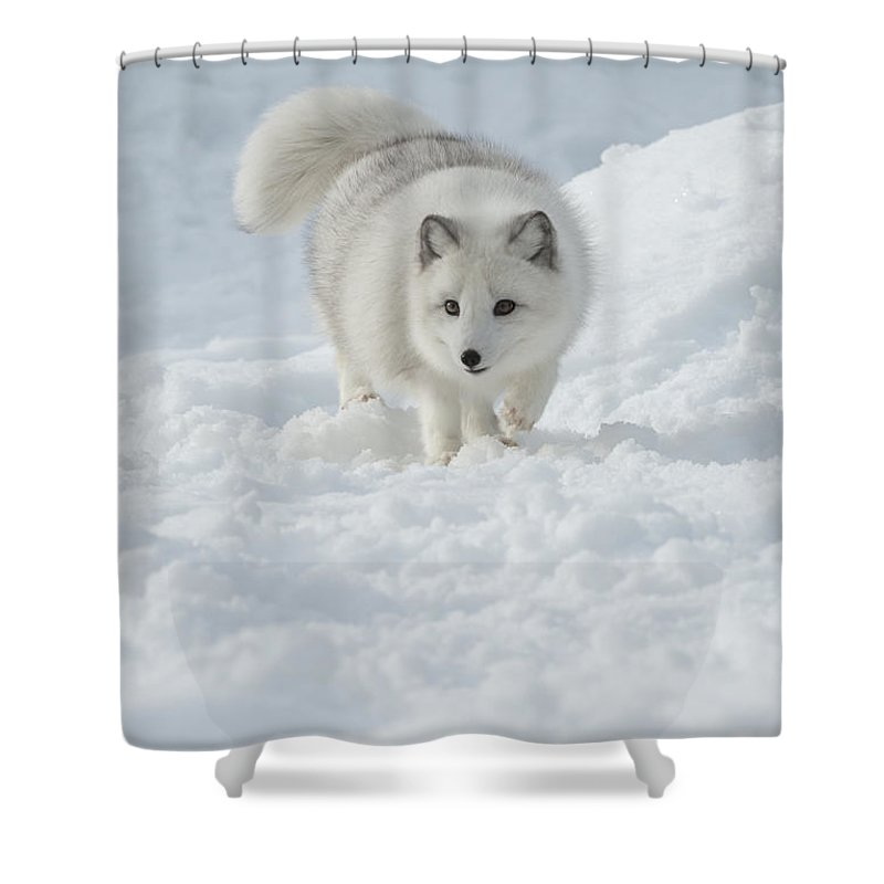 Wildlife Shower Curtain featuring the photograph Snowy Day Stroll by Sandra Bronstein