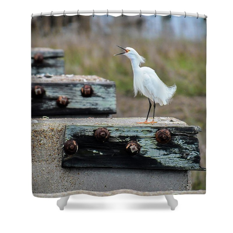 Avian Shower Curtain featuring the photograph Snowy Egret #2 by Tim Bond