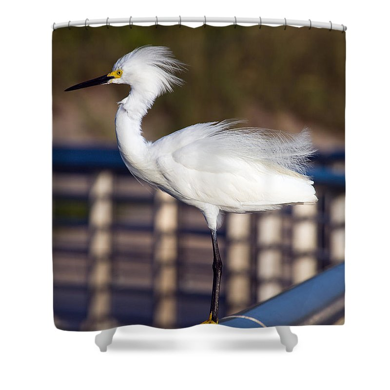 Snow; Snowy; Egret; Egretta; Thula; Bird; Florida; Seabird; Sea; Shore; Coast; Atlantic; Yellow; Fee Shower Curtain featuring the photograph Snowy Egret by Allan Hughes