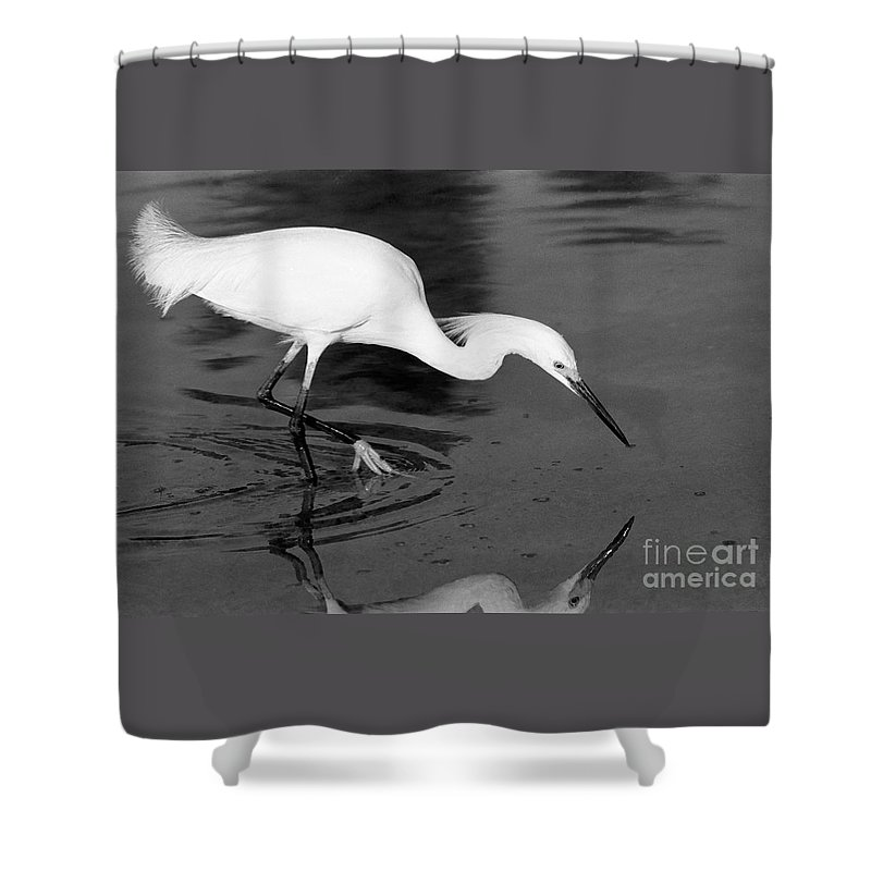 Egret Shower Curtain featuring the photograph Snowy Egret Fishing by John Harmon