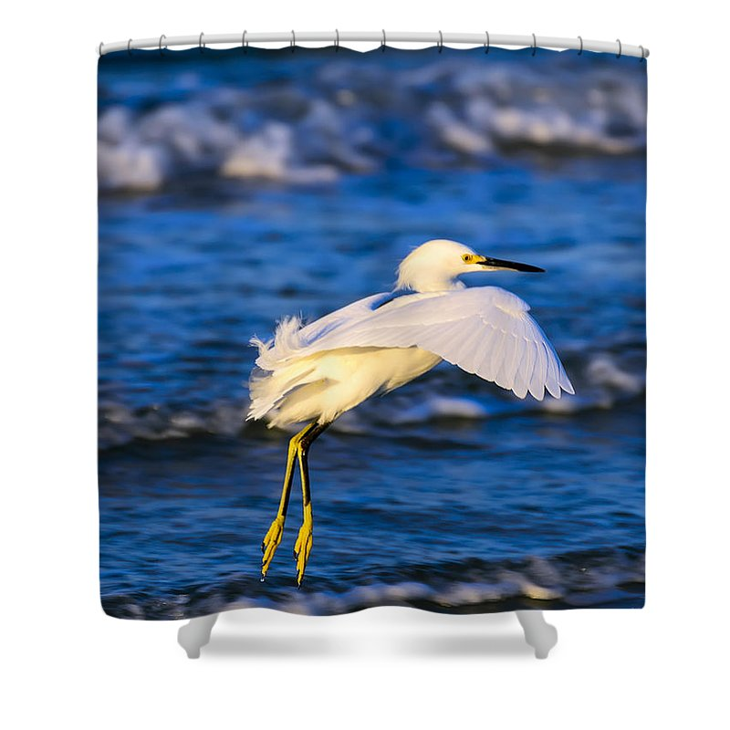 Ardeidae Shower Curtain featuring the photograph Snowy Egret Lands In Surf by Steve Samples