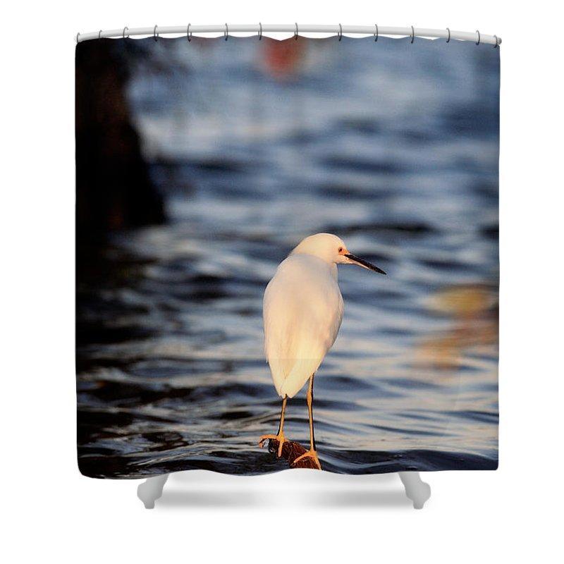Snowy Egret Shower Curtain featuring the photograph Snowy Egret by Matt Suess