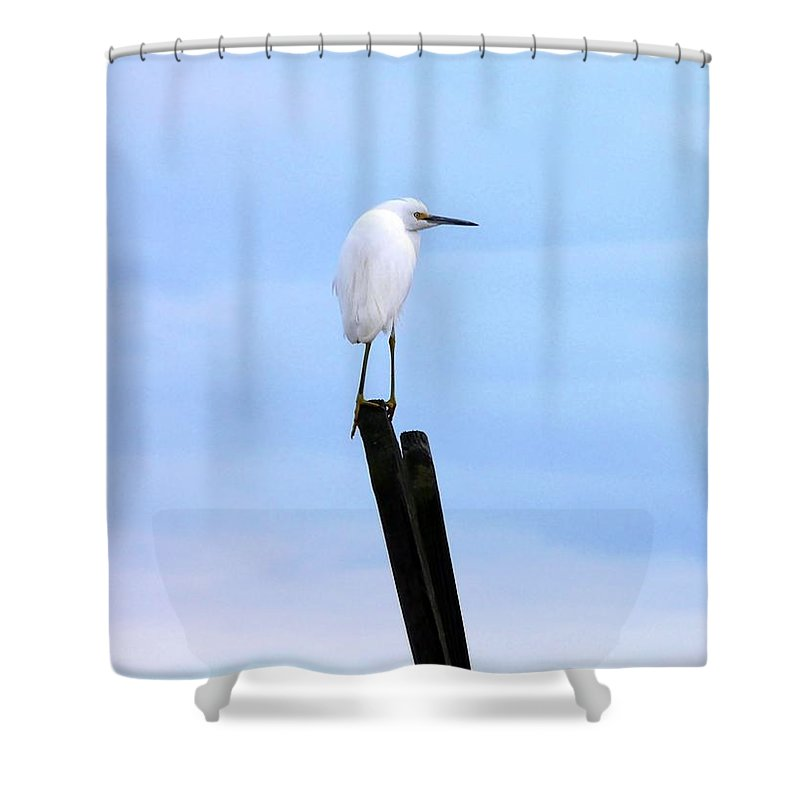 Snowy Egret Shower Curtain featuring the photograph Snowy Egret On Post by Al Powell Photography USA