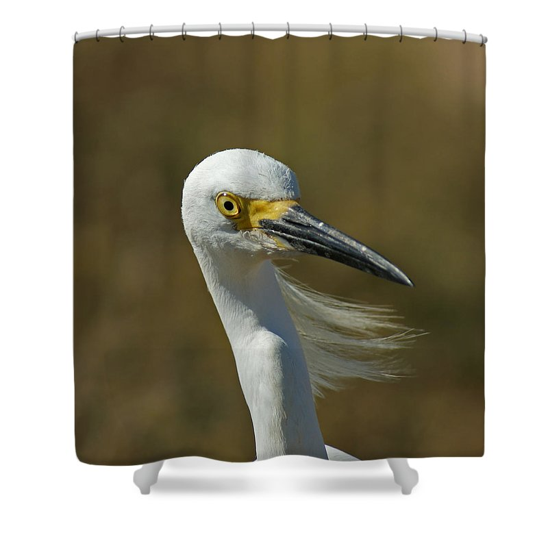 Birds Shower Curtain featuring the photograph Snowy Egret Profile 2 by Ernie Echols